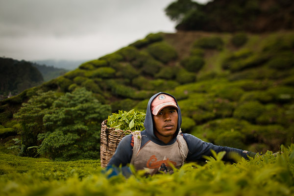 Репортаж из Cameron Highlands Фотограф Николай Рыков