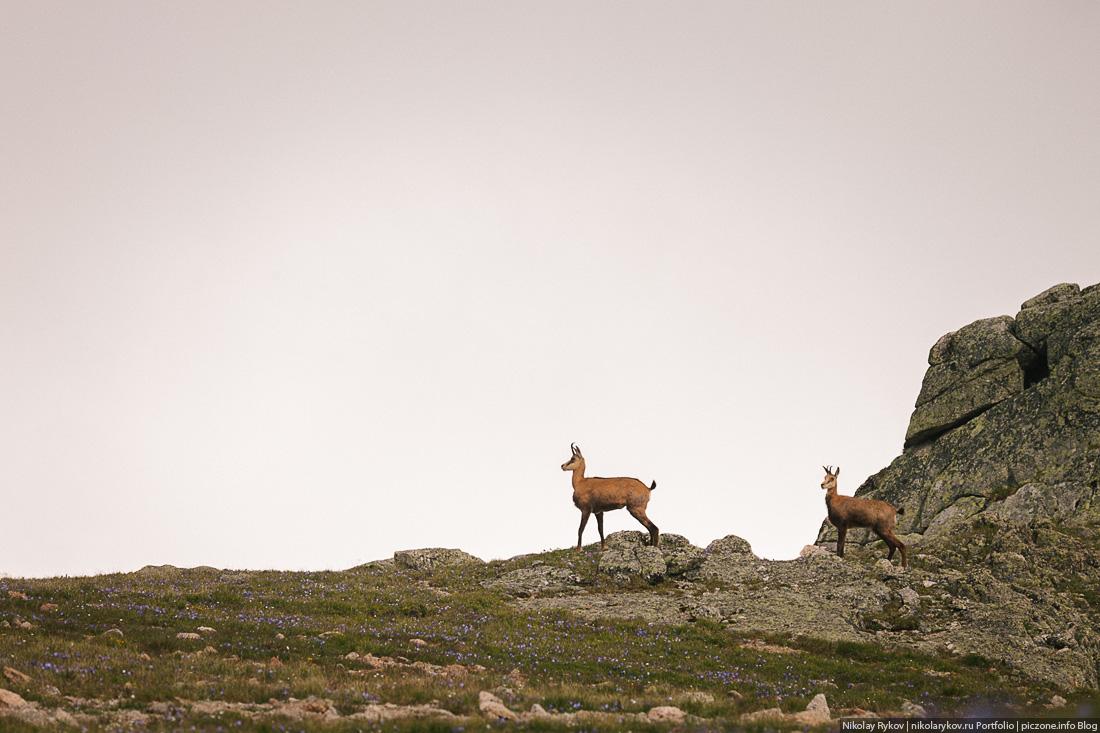 Фотографии из Кавказского биосферного заповедника 2013 год